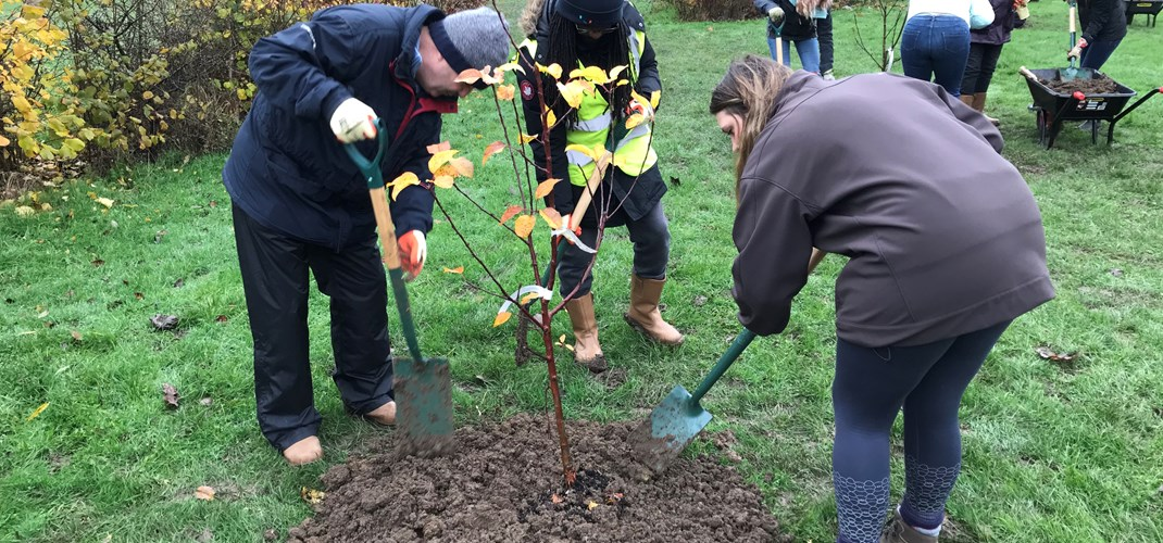 Vounteers planting trees for community orchard
