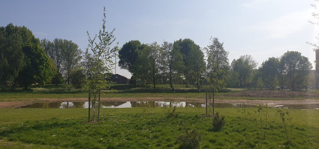Rectory Park Community Orchard 1.jpg