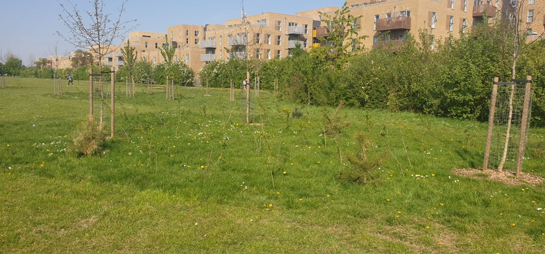 Rectory Park Community Orchard 2.jpg