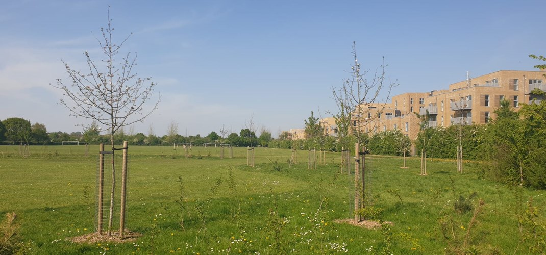 Rectory Park Community Orchard 4.jpg