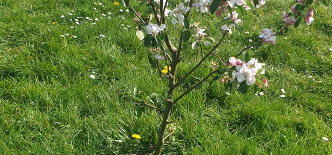 Rectory Park Community Orchard 5.jpg